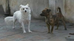 Barranco, Perros, Municipalidad de Barranco,  Perros abandonados