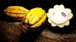 Cacao
