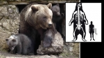 Sudamrica, Animales, Prehistoria, Osos,  Oso gigante sudamericano de cara corta