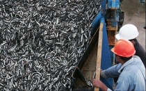 El Produce y la SNP mantienen polmica en torno a biomasa de anchoveta