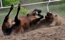 Maltrato Animal, Espaa, Caballos, Crueldad hacia los animales,  Caballo de Carrera