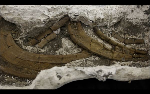 Hallan fósiles de especies extintas desconocidas en canal de Panamá