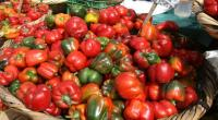 Pimientos y tomates reduciran riesgo de sufrir el mal de Parkinson