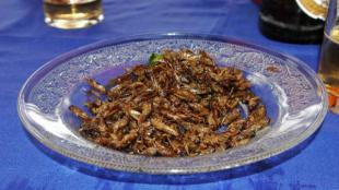 Cinco destinos tursticos donde los insectos son una especialidad culinaria