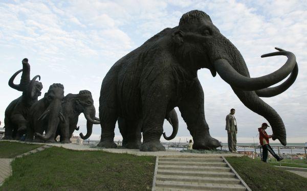 Encuentran restos de mamut con tejido muscular y sangre
