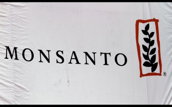 Monsanto renuncia a su lucha por la industria transgénica en Europa